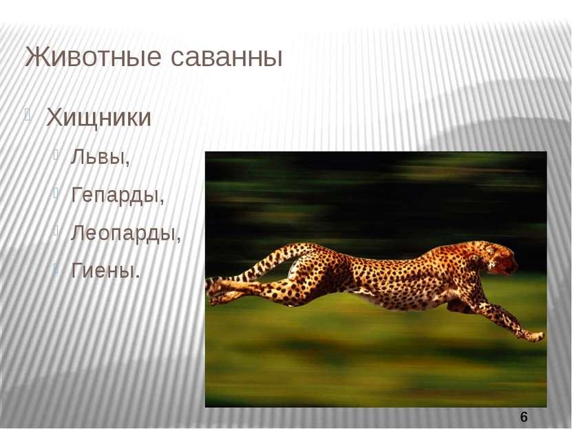 Животные саванны Хищники Львы, Гепарды, Леопарды, Гиены.
