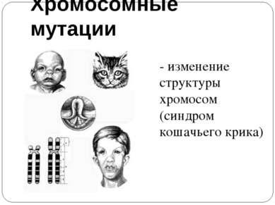 Хромосомные мутации - изменение структуры хромосом (синдром кошачьего крика)