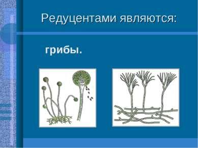 Редуцентами являются: грибы.