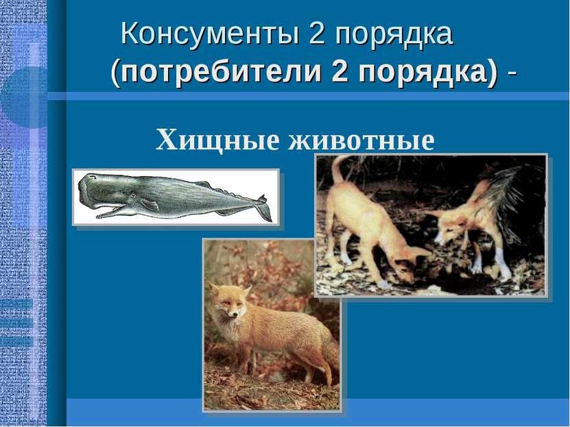 Консументы 2 порядка (потребители 2 порядка) - Хищные животные