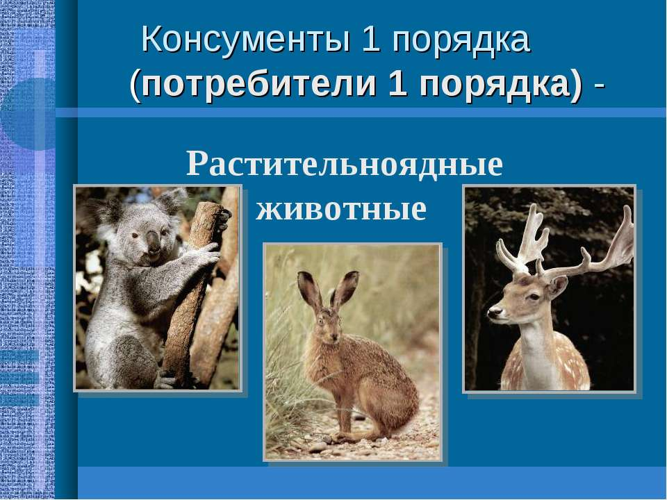 Консументы 1 порядка (потребители 1 порядка) - Растительноядные животные