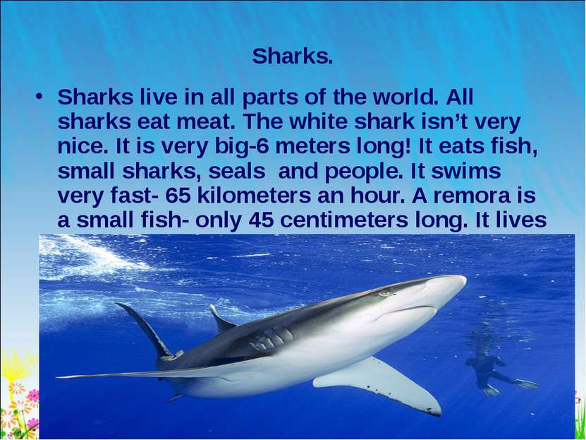* Sharks. Sharks live in all parts of the world. All sharks eat meat. The whi...