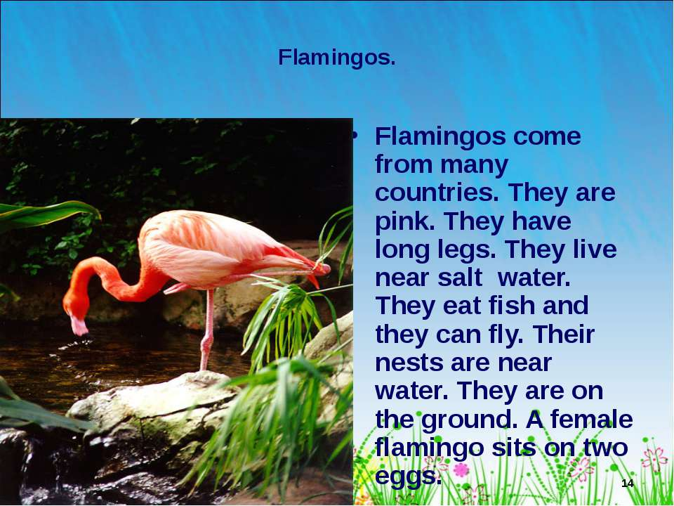 * Flamingos. Flamingos come from many countries. They are pink. They have lon...