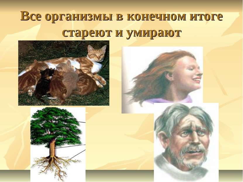 Все организмы в конечном итоге стареют и умирают