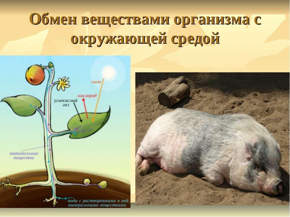 Обмен веществами организма с окружающей средой