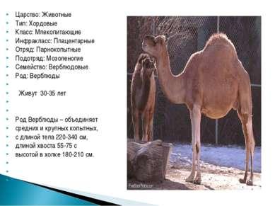 Царство: Животные Тип: Хордовые Класс: Млекопитающие Инфракласс: Плацентарные...
