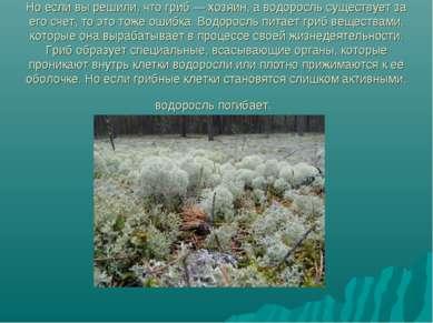 Но если вы решили, что гриб — хозяин, а водоросль существует за его счет, то ...