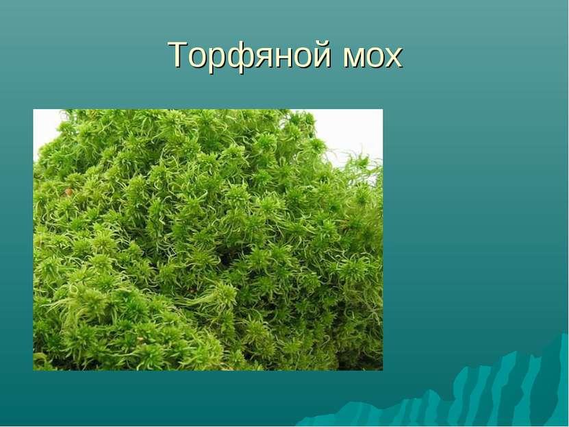 Торфяной мох