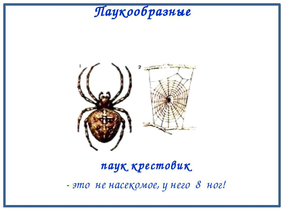 краб лангуст креветка