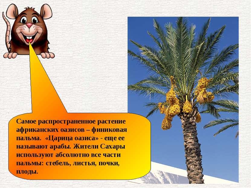 Самое распространенное растение африканских оазисов – финиковая пальма. «Цари...