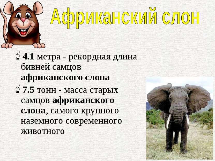 4.1метра - рекордная длина бивней самцов африканского слона 7.5тонн - масса...