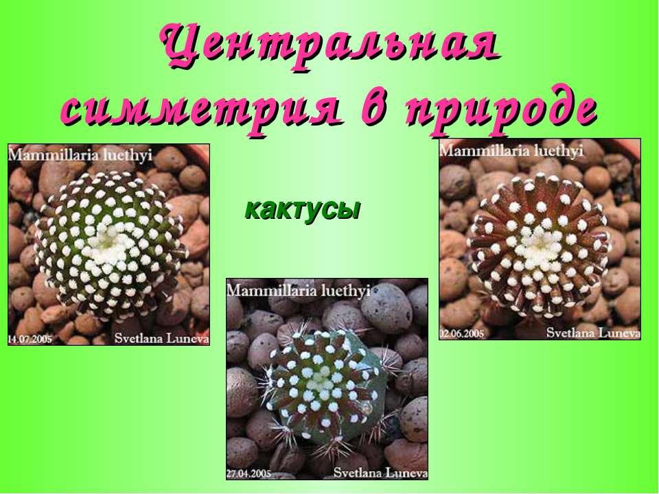 Центральная симметрия в природе кактусы