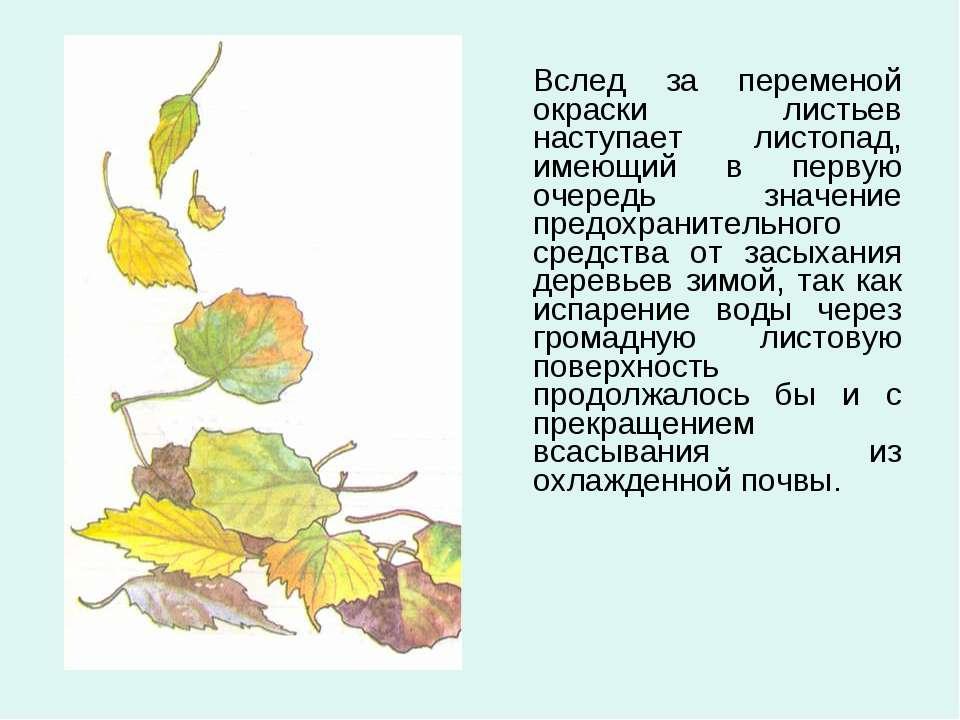 Вслед за переменой окраски листьев наступает листопад, имеющий в первую очере...
