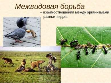 Межвидовая борьба – взаимоотношения между организмами разных видов.