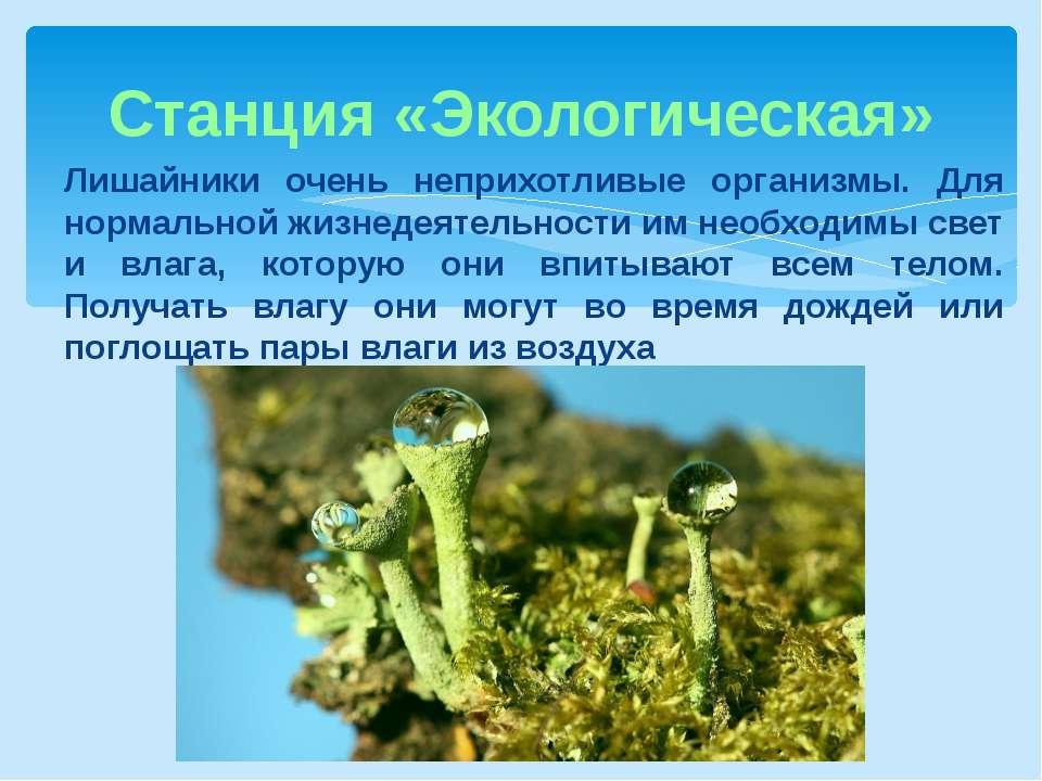 Станция «Экологическая» Лишайники очень неприхотливые организмы. Для нормальн...