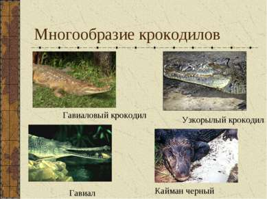 Многообразие крокодилов Кайман черный Узкорылый крокодил Гавиал Гавиаловый кр...