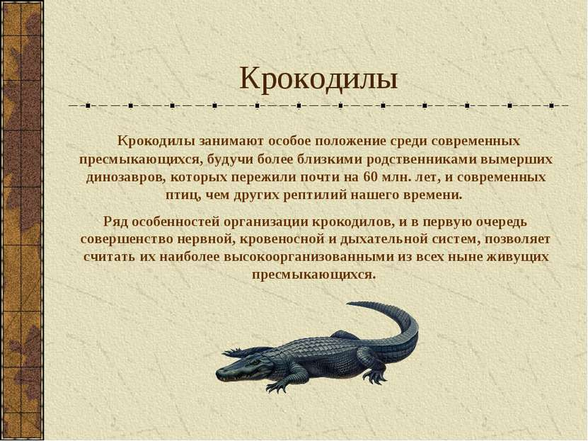 Крокодилы Крокодилы занимают особое положение среди современных пресмыкающихс...