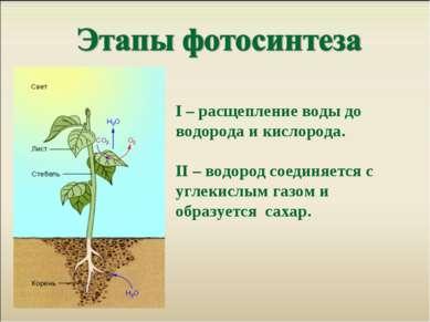 Ι – расщепление воды до водорода и кислорода. II – водород соединяется с угле...