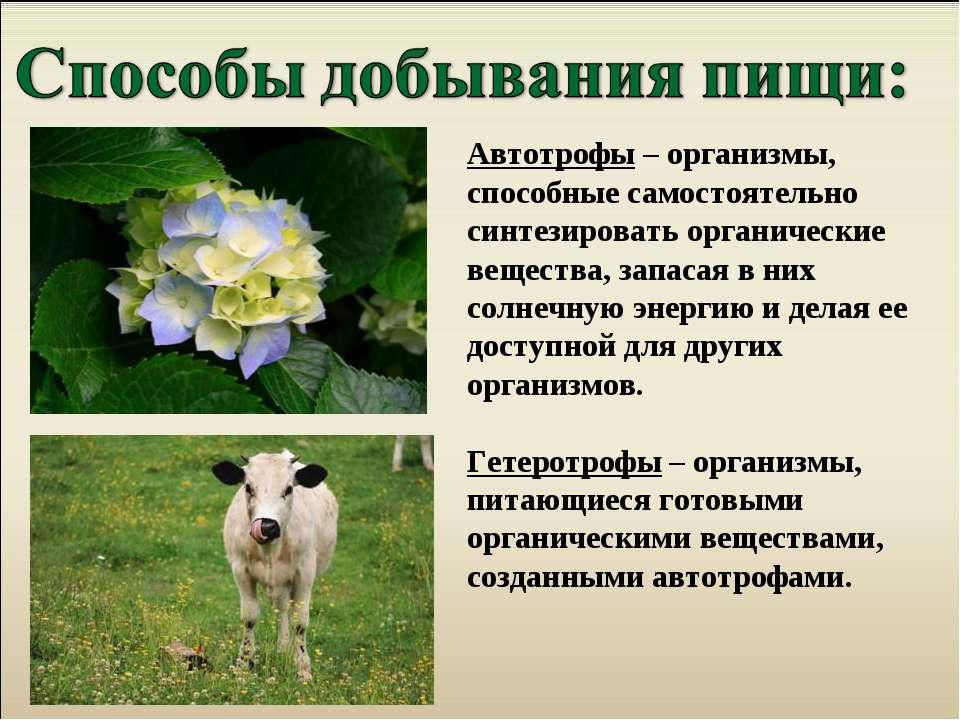 Автотрофы – организмы, способные самостоятельно синтезировать органические ве...