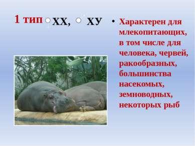 1 тип Характерен для млекопитающих, в том числе для человека, червей, ракообр...