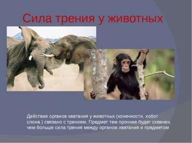 Сила трения у животных Действие органов хватания у животных (конечности, хобо...
