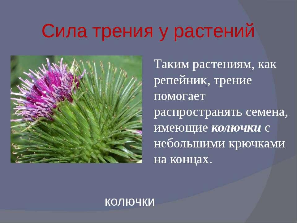 Сила трения у растений Таким растениям, как репейник, трение помогает распрос...