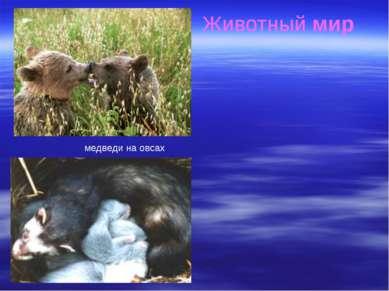 Животный мир Флористический и фаунистический состав территории заповедника пр...