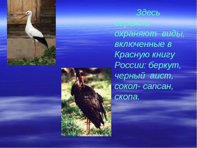 Здесь бережно охраняют виды, включенные в Красную книгу России: беркут, черны...