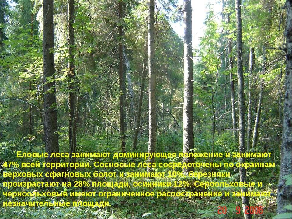 Еловые леса занимают доминирующее положение и занимают 47% всей территории. С...