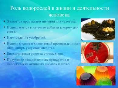Роль водорослей в жизни и деятельности человека Являются продуктами питания ...