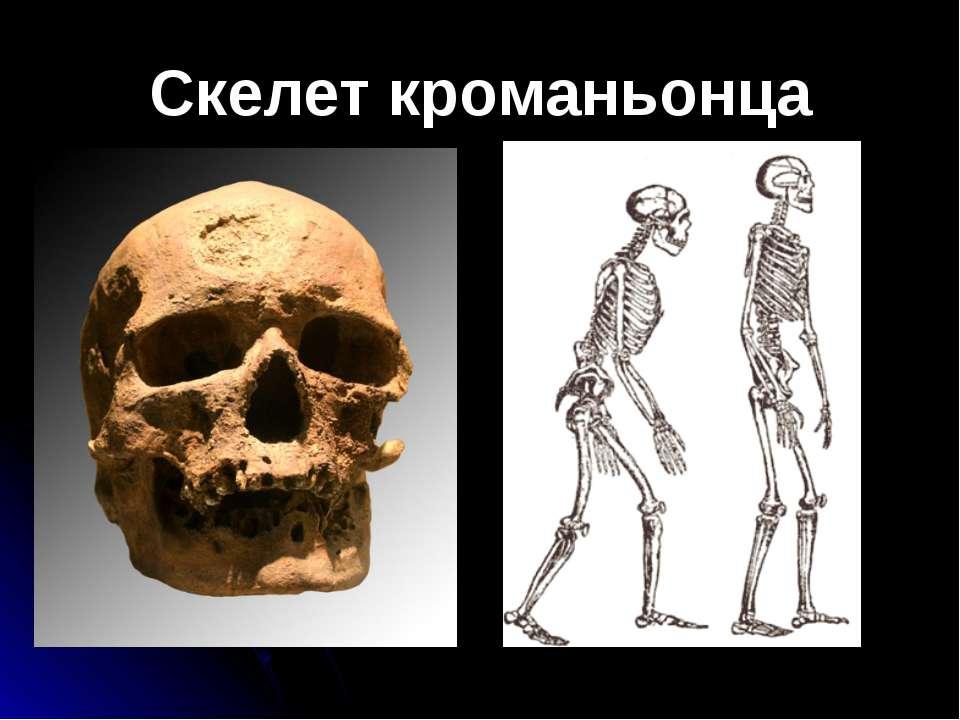 Скелет кроманьонца