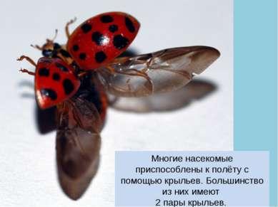 Многие насекомые приспособлены к полёту с помощью крыльев. Большинство из них...