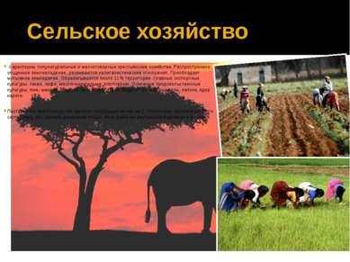 Характерны полунатуральные и мелкотоварные крестьянские хозяйства. Распростра...