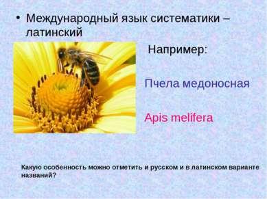 Международный язык систематики – латинский Например: Пчела медоносная Apis me...