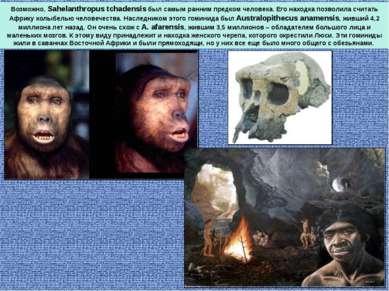 Возможно, Sahelanthropus tchadensis был самым ранним предком человека. Его на...