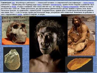 Синантроп (лат.Sinanthropus pekinensis — «пекинский человек», в современной ...