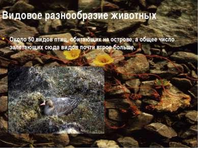 Видовое разнообразие животных Около 50 видов птиц, обитающих на острове, а об...