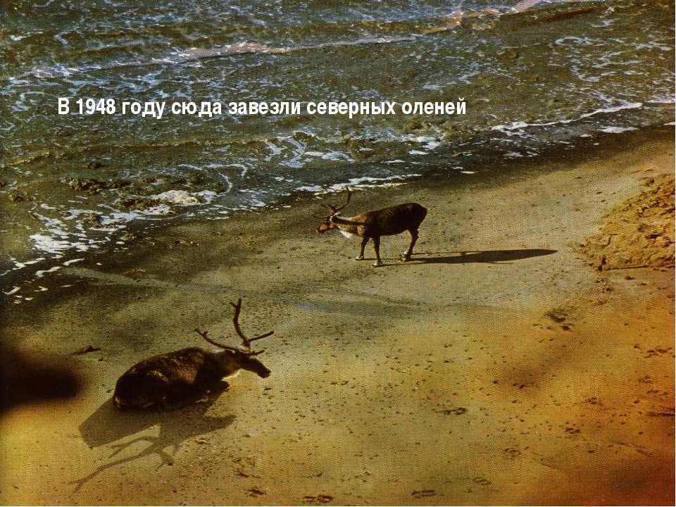 В 1948 году сюда завезли северных оленей