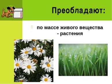 Преобладают: по массе живого вещества - растения