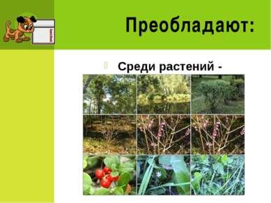 Преобладают: Среди растений - покрытосеменные