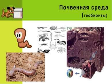 Почвенная среда (геобионты)
