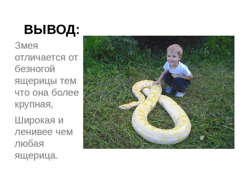 ВЫВОД: Змея отличается от безногой ящерицы тем что она более крупная, Широкая...
