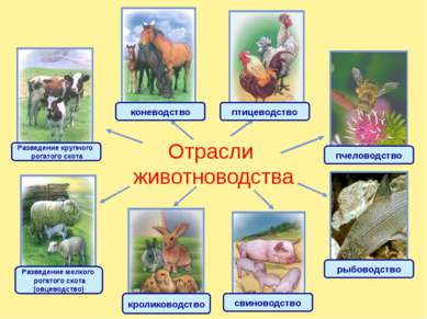 Корова – домашнее животное. Человек приручил корову более 6 000 лет назад, и ...