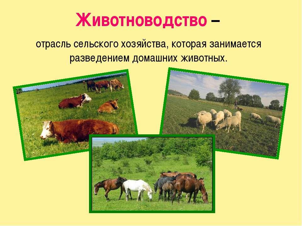 Животные поставляют населению продукты питания: мясо, молоко, сало, яйца. Они...