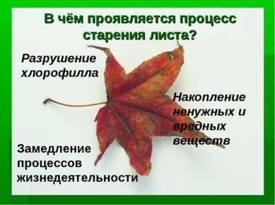 В чём проявляется процесс старения листа? Разрушение хлорофилла Накопление не...