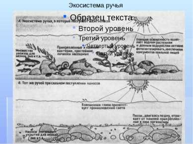 Экосистема ручья
