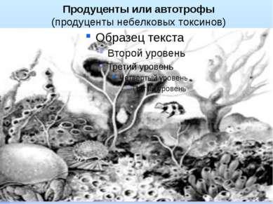 Продуценты или автотрофы (продуценты небелковых токсинов)