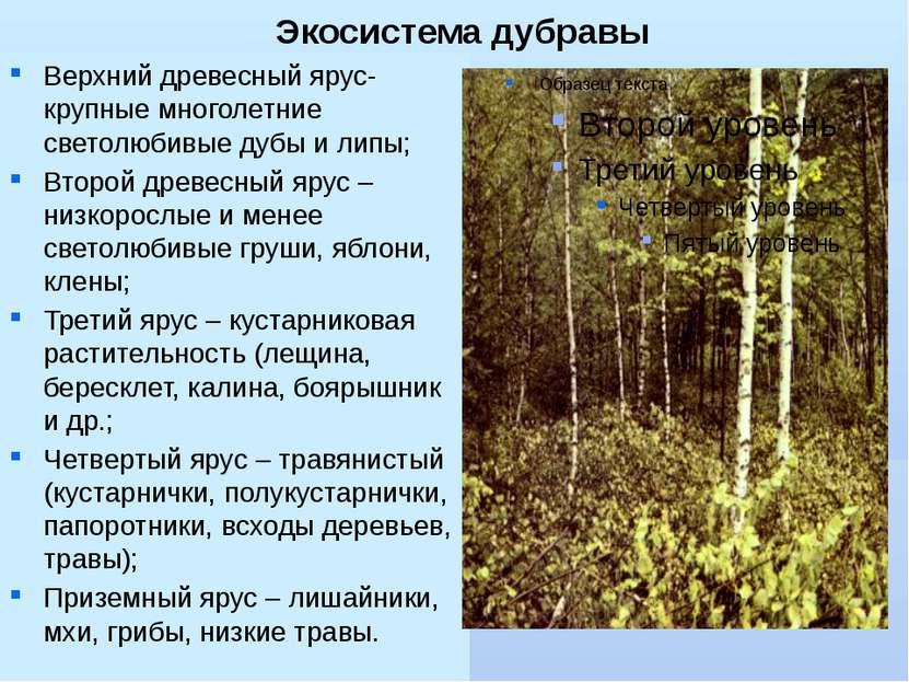 Экосистема дубравы Верхний древесный ярус- крупные многолетние светолюбивые д...