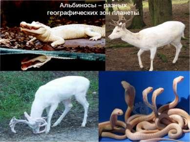 Альбиносы – разных географических зон планеты
