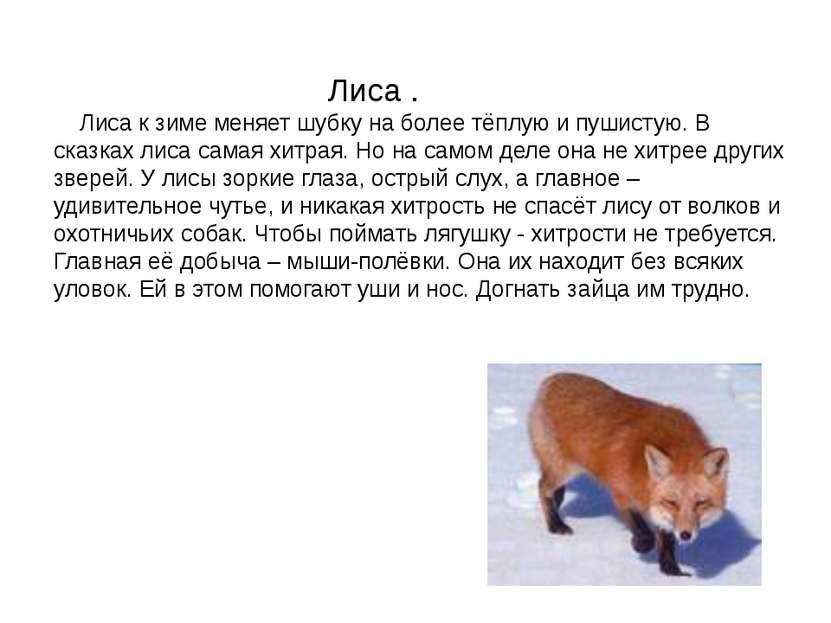 Лиса . Лиса к зиме меняет шубку на более тёплую и пушистую. В сказках лиса са...